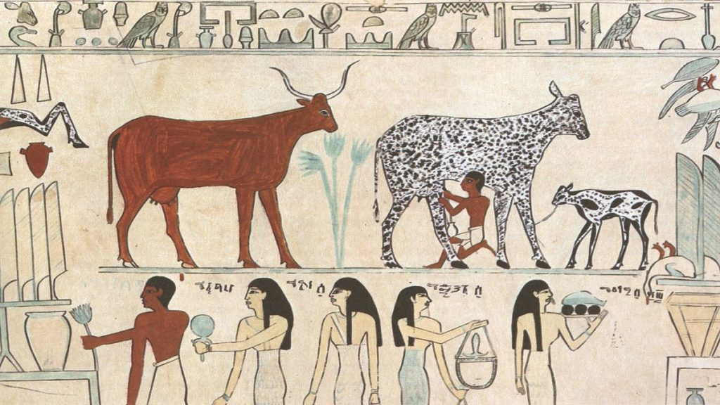Milking Cows in Ancient Egypt